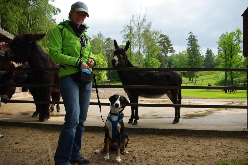 Frauchen und ich mit den Eseln