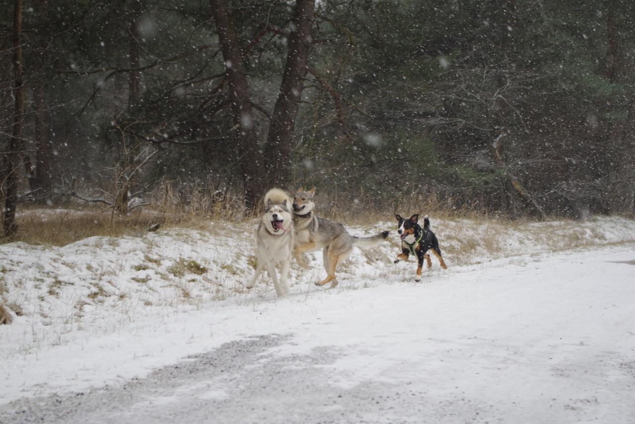 Es wird immer mehr Schnee