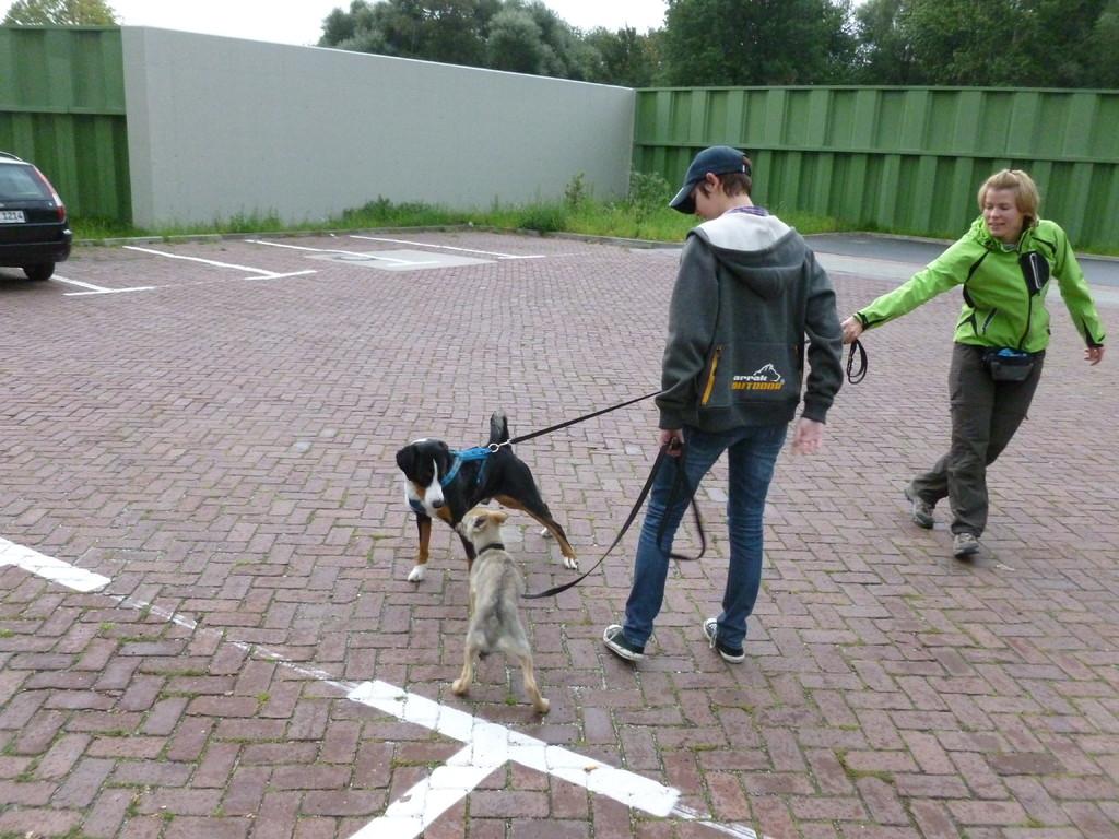 Ich habe die kleine Shendy kennengelernt. Ein Tschechoslowakischer Wolfhund ist Sie und ist 13 Wochen alt