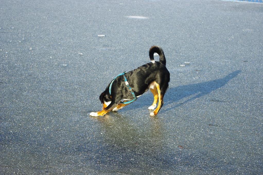 Ob ich den Stock aus dem Eis befreien kann