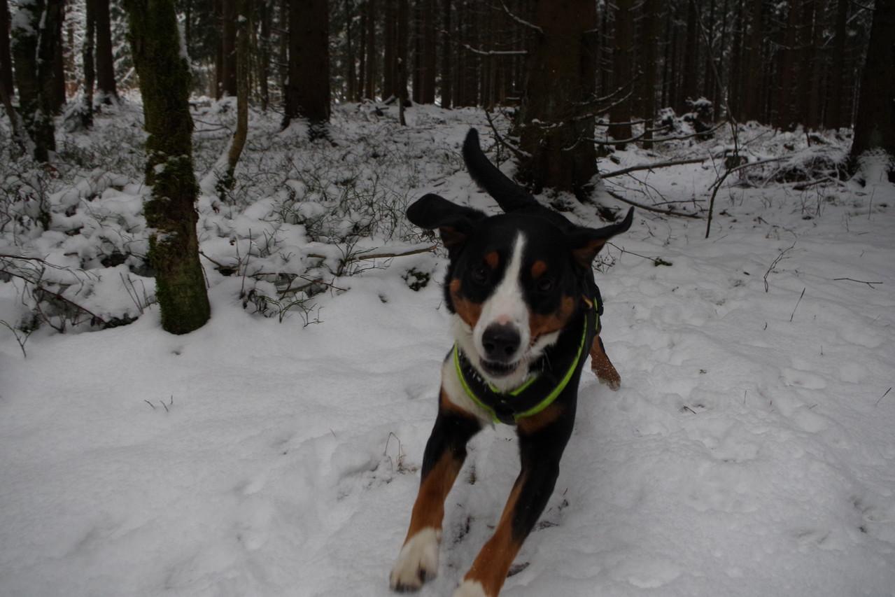 Man freu ich mich über den Schnee :-)