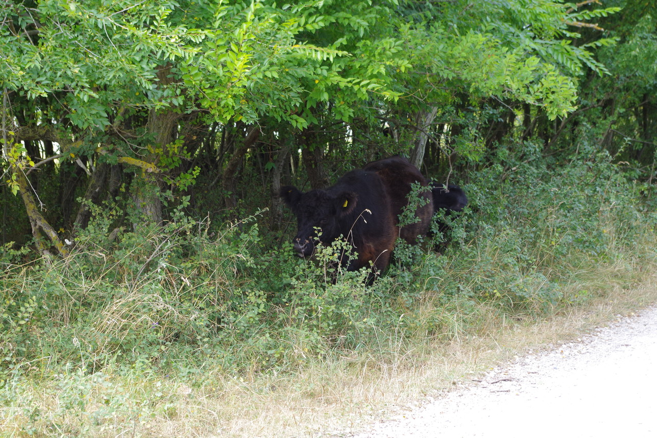 da liegt ja ein Rind neben dem Weg ;-)