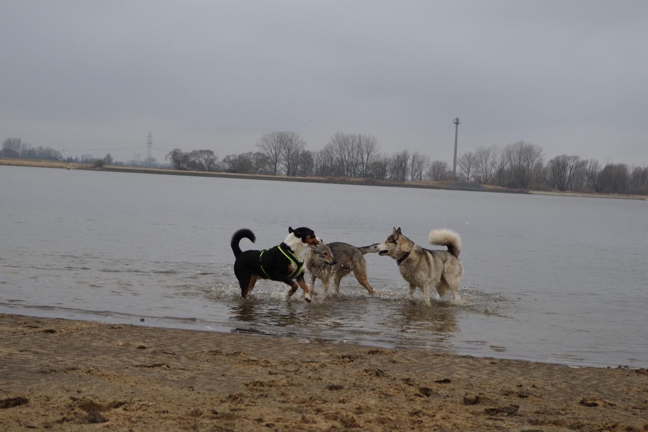 Keikoo, Shendy und ich an der Weser