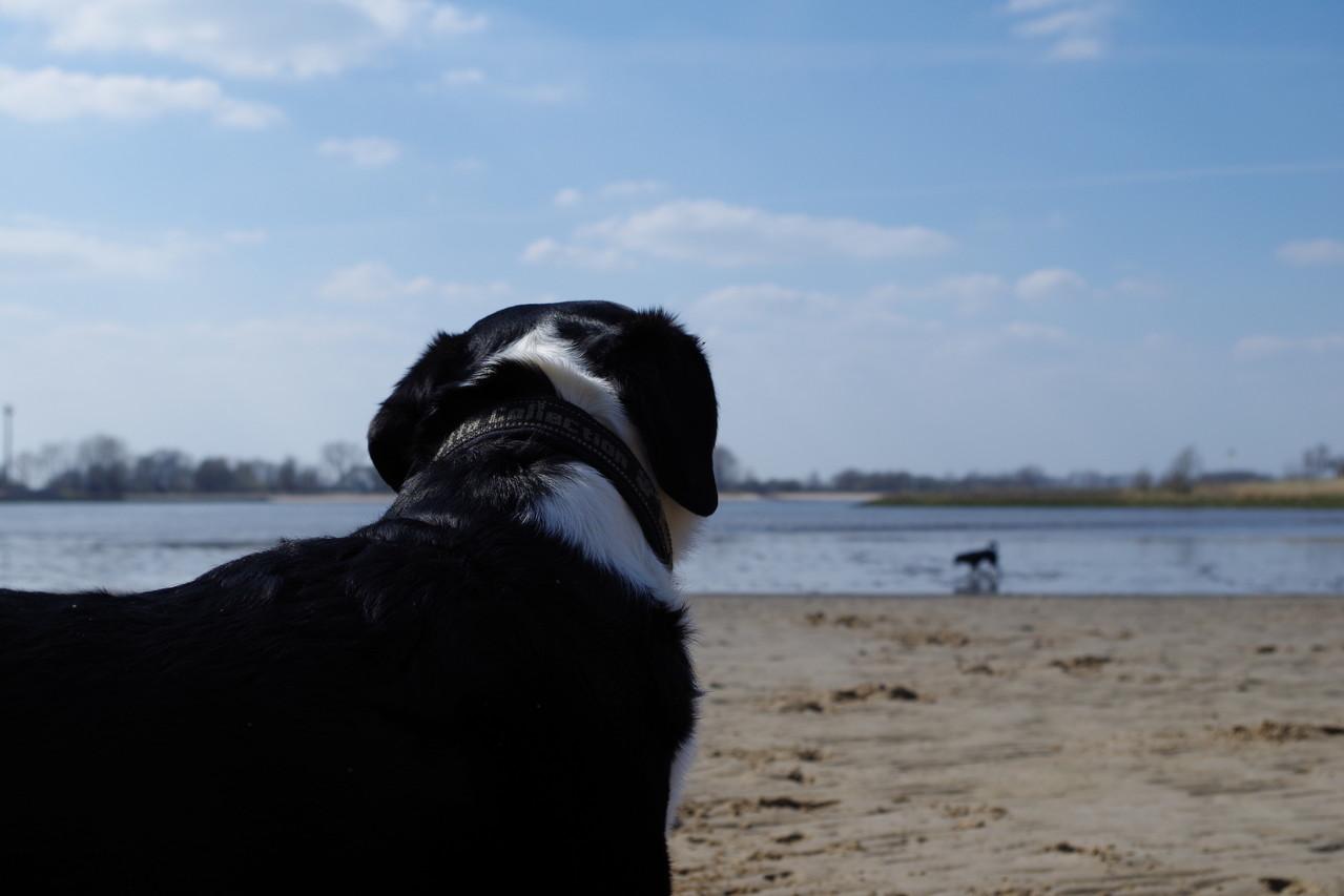 Der Hund buddelt sich in den Schlick, ob der wohl nachher stinkt? :-)