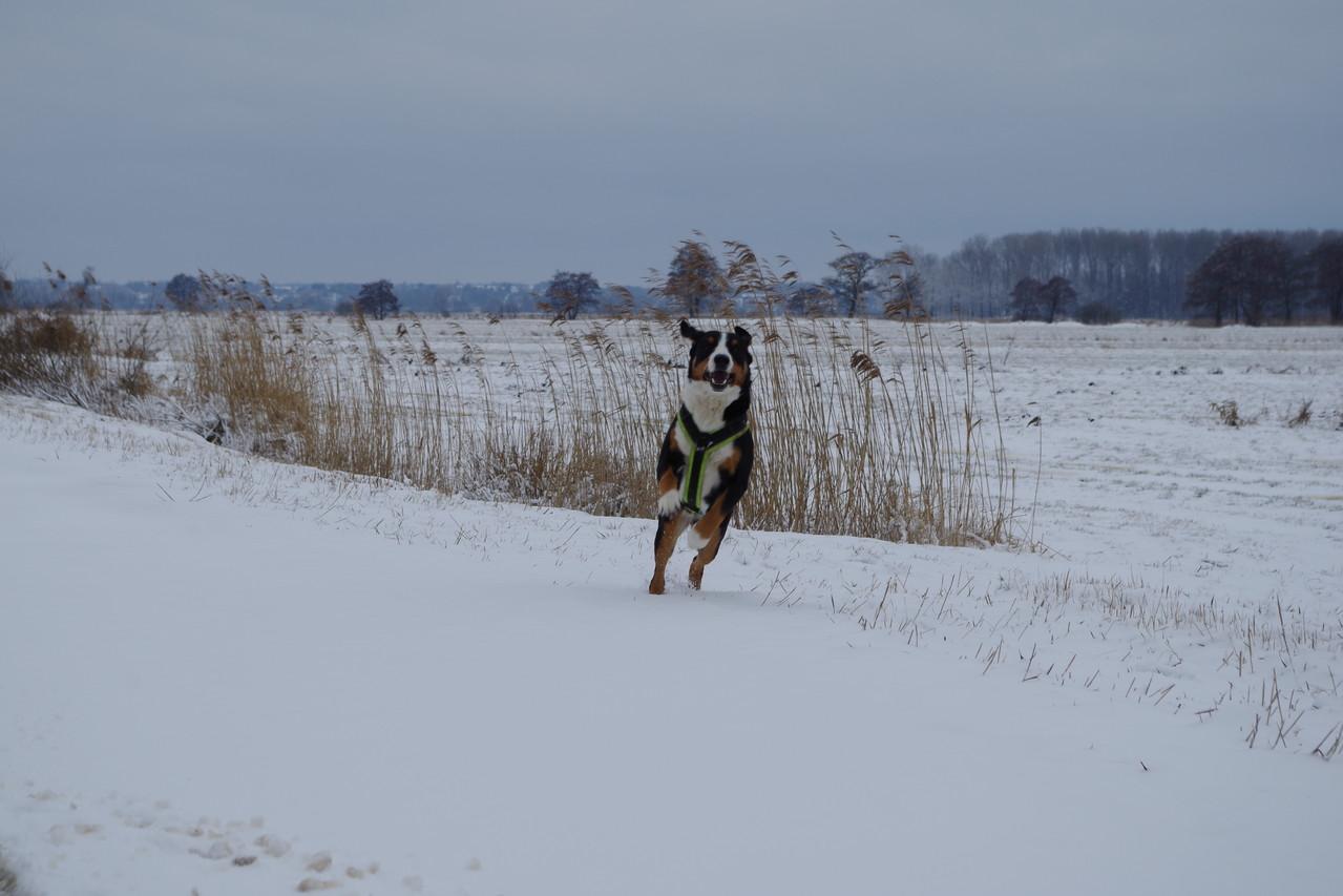 Schnee, *freu*