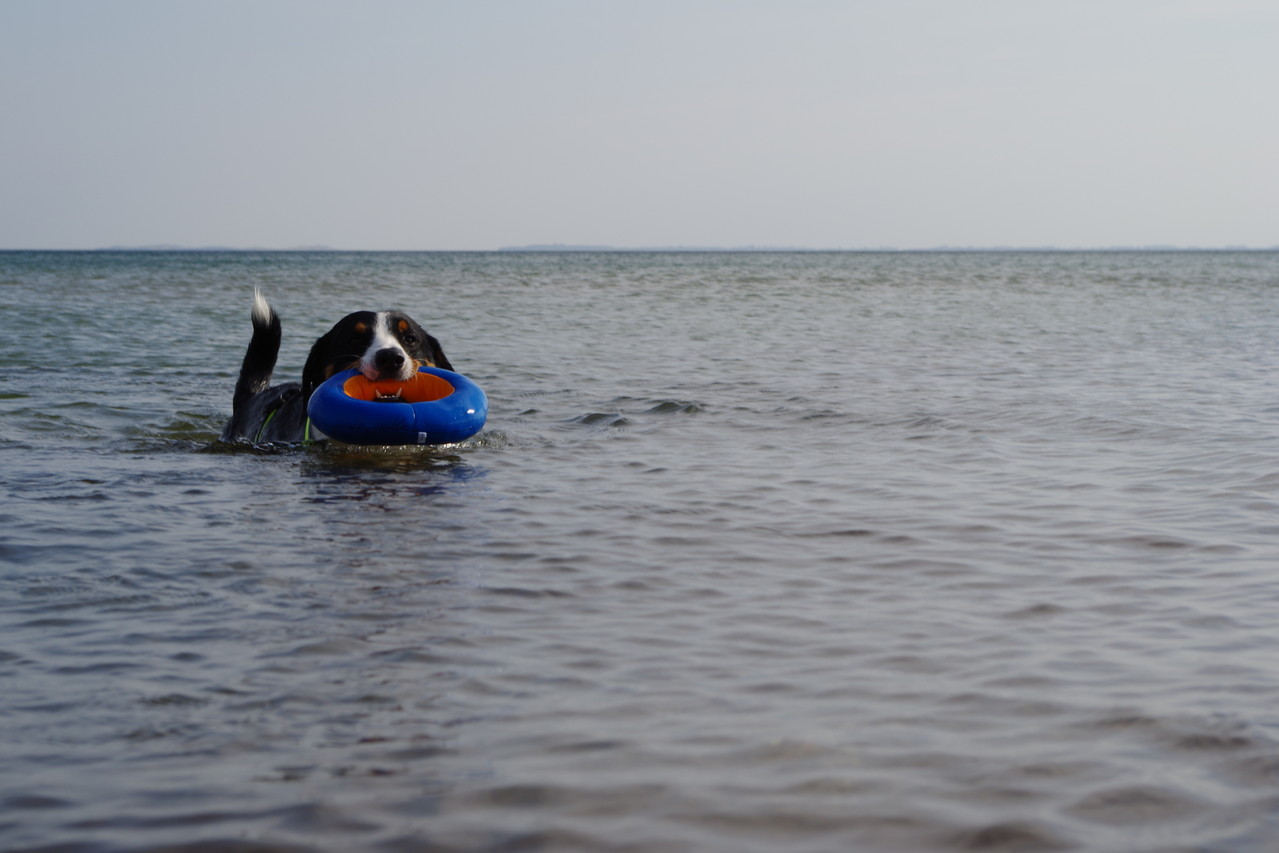 Hier kann man ganz toll schwimmen :-)
