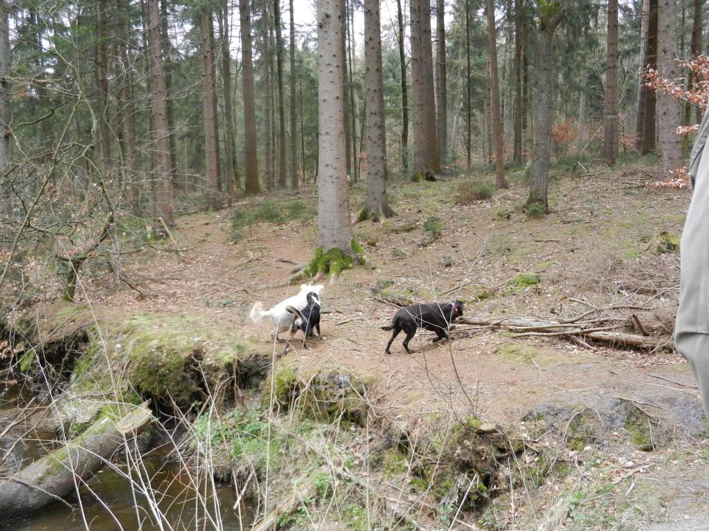 Nochmal ohne Leine im Wald, bevor die Setz- und Brutzeit kommt