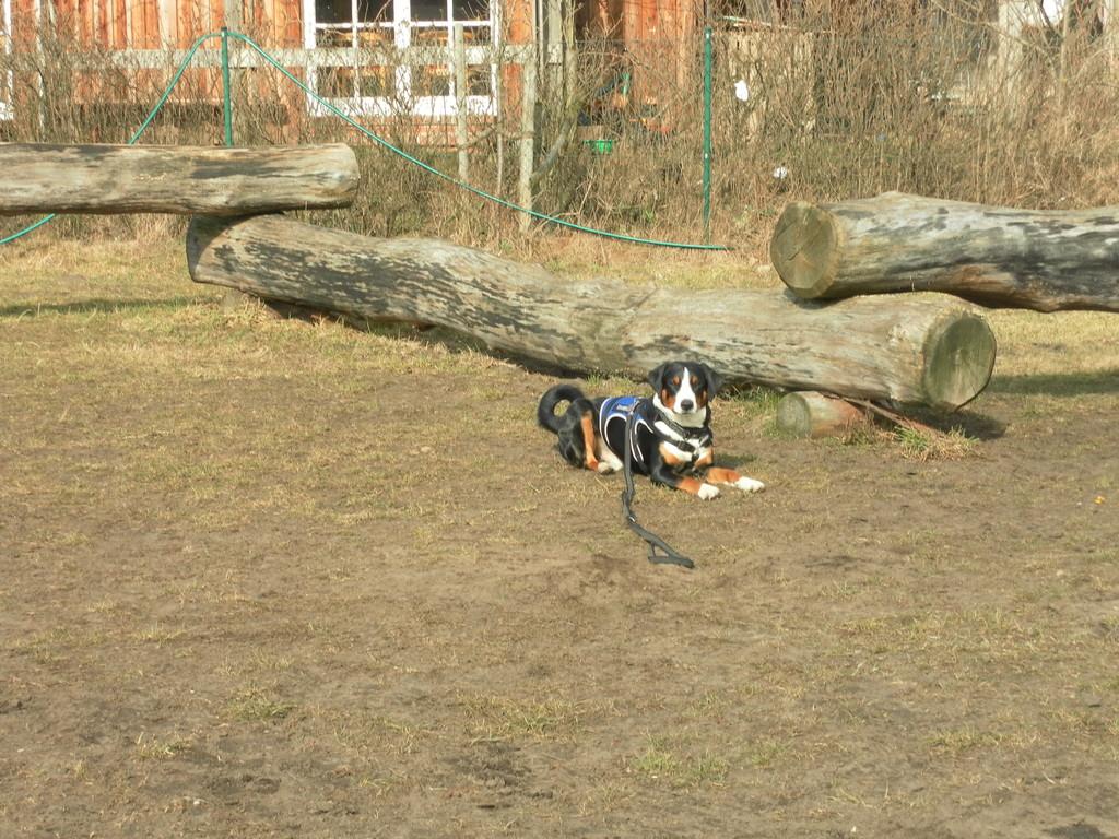 """""""Bleib-Übung"""" in der Hundeschule"""