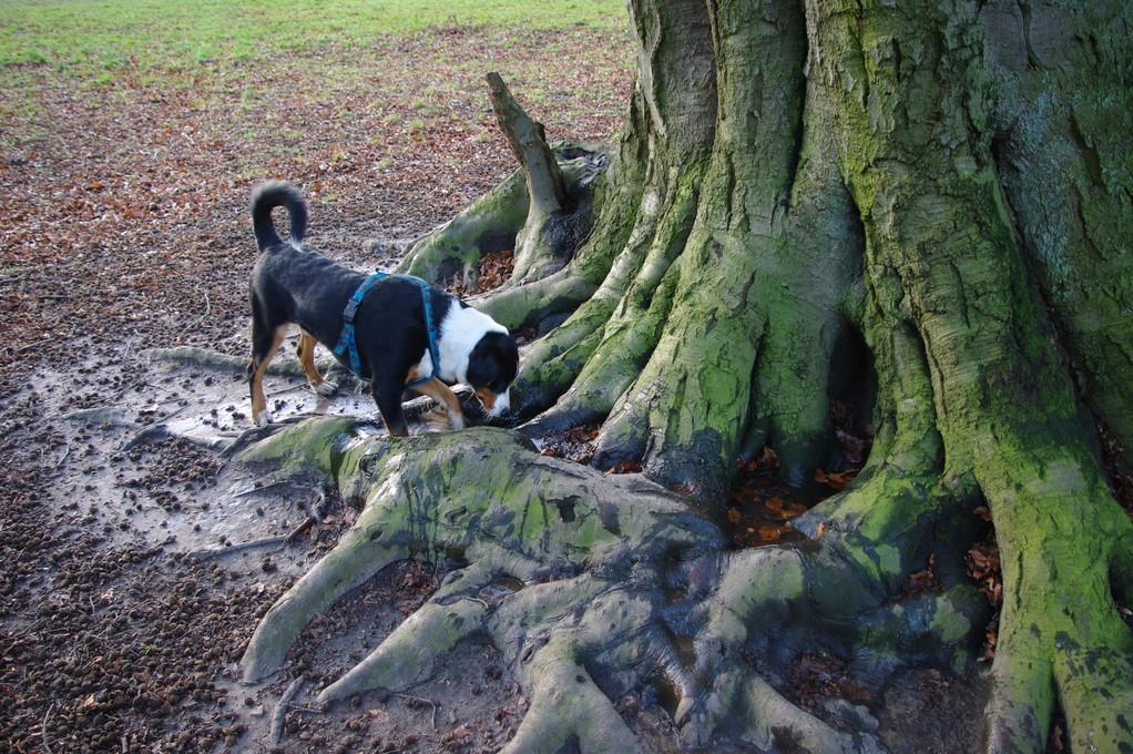 Der Baum ist bei uns allen bekannt :-)