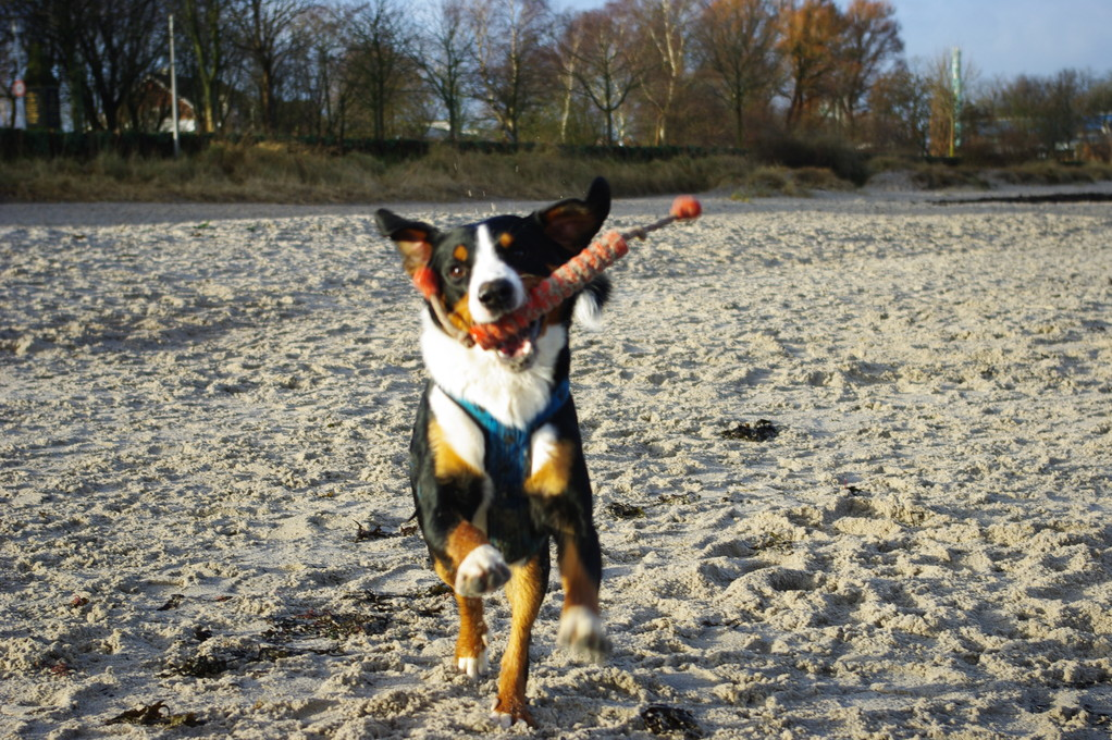 Und wieder am Strand spielen