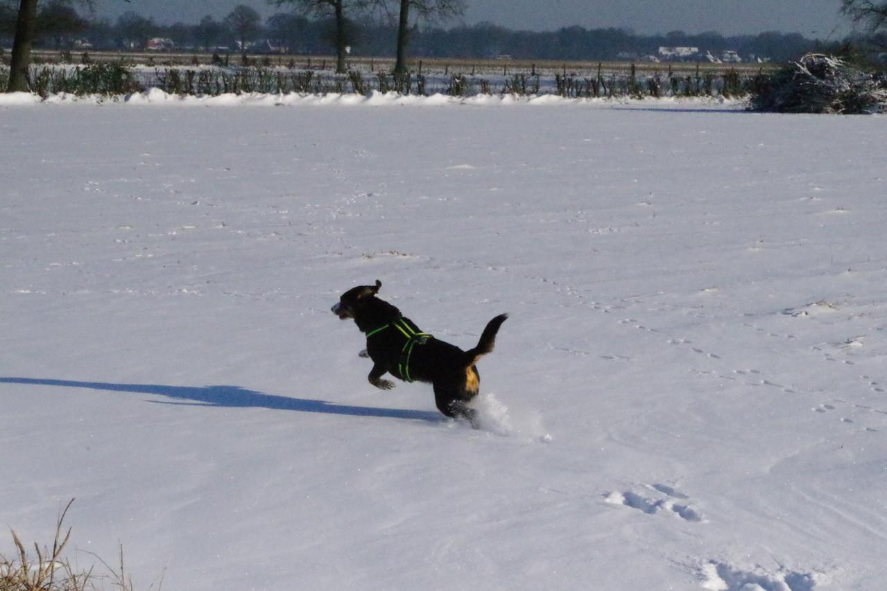 Toben im Schnee!!!