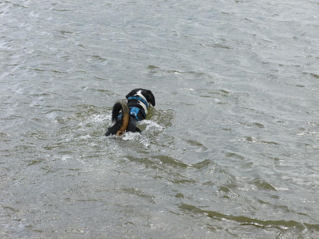 Erst einmal schwimmen im Rhein