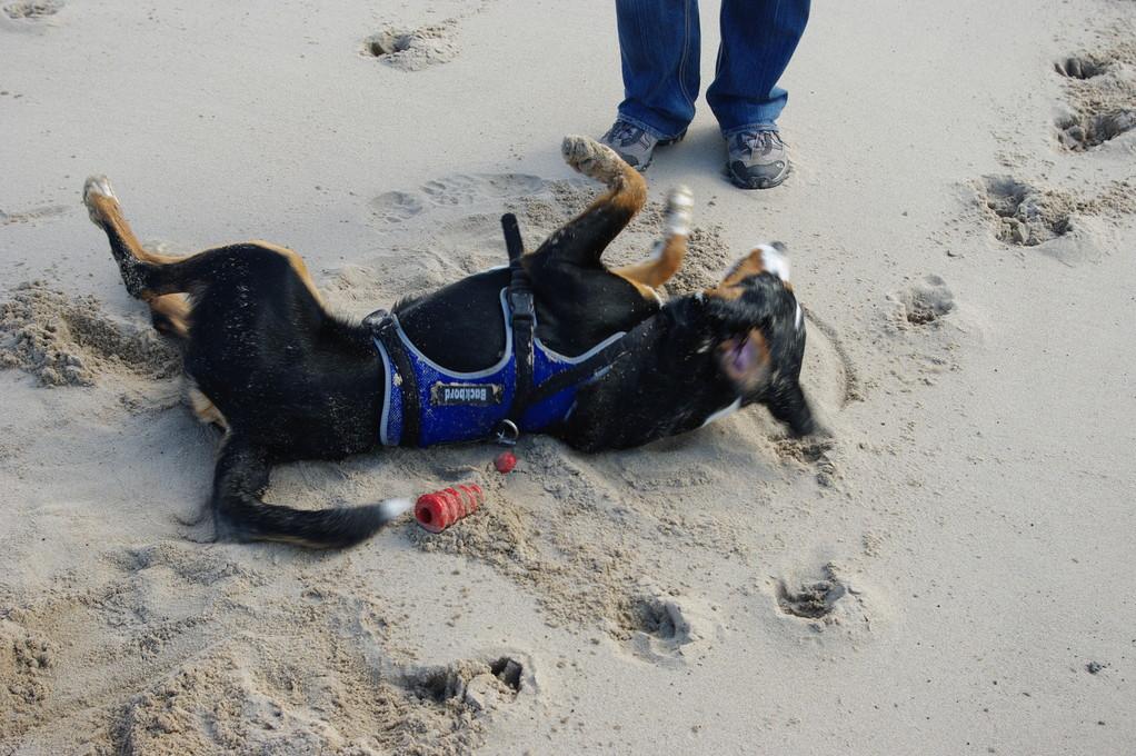 wälzen im Sand...