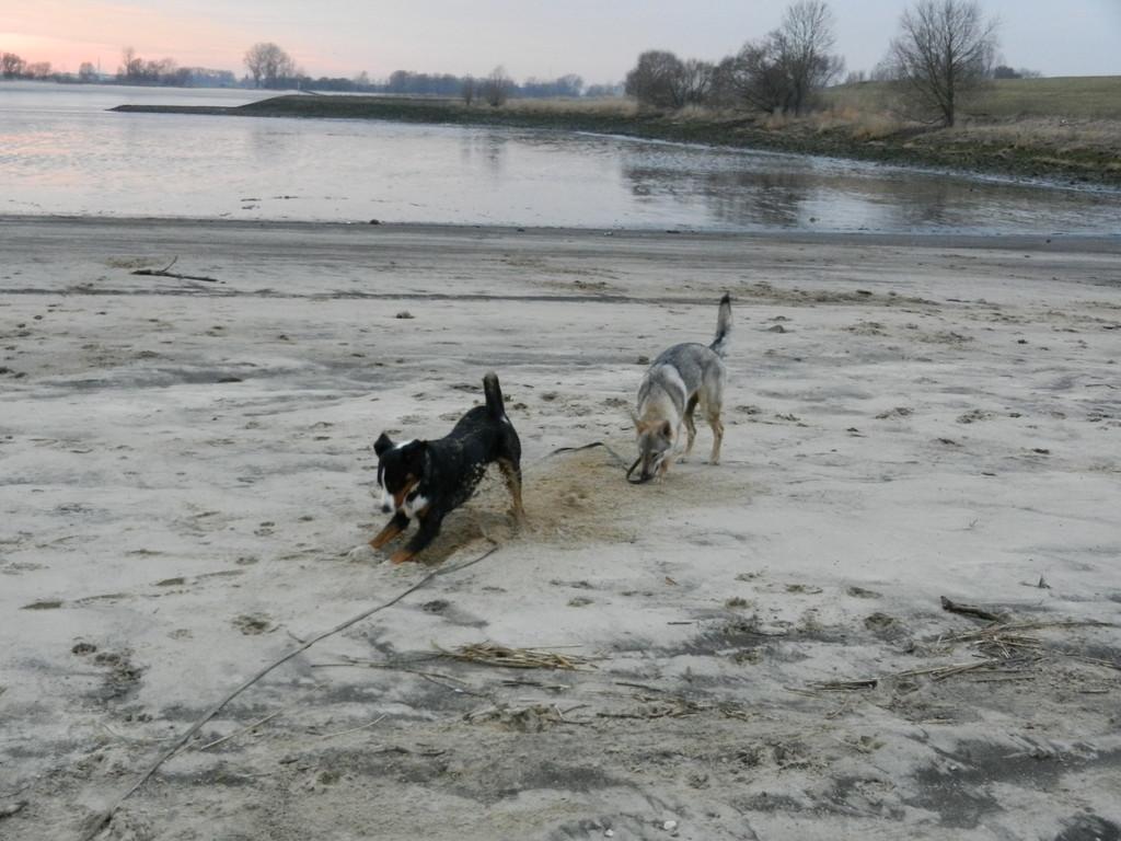 Mit Shendy an der Weser toben
