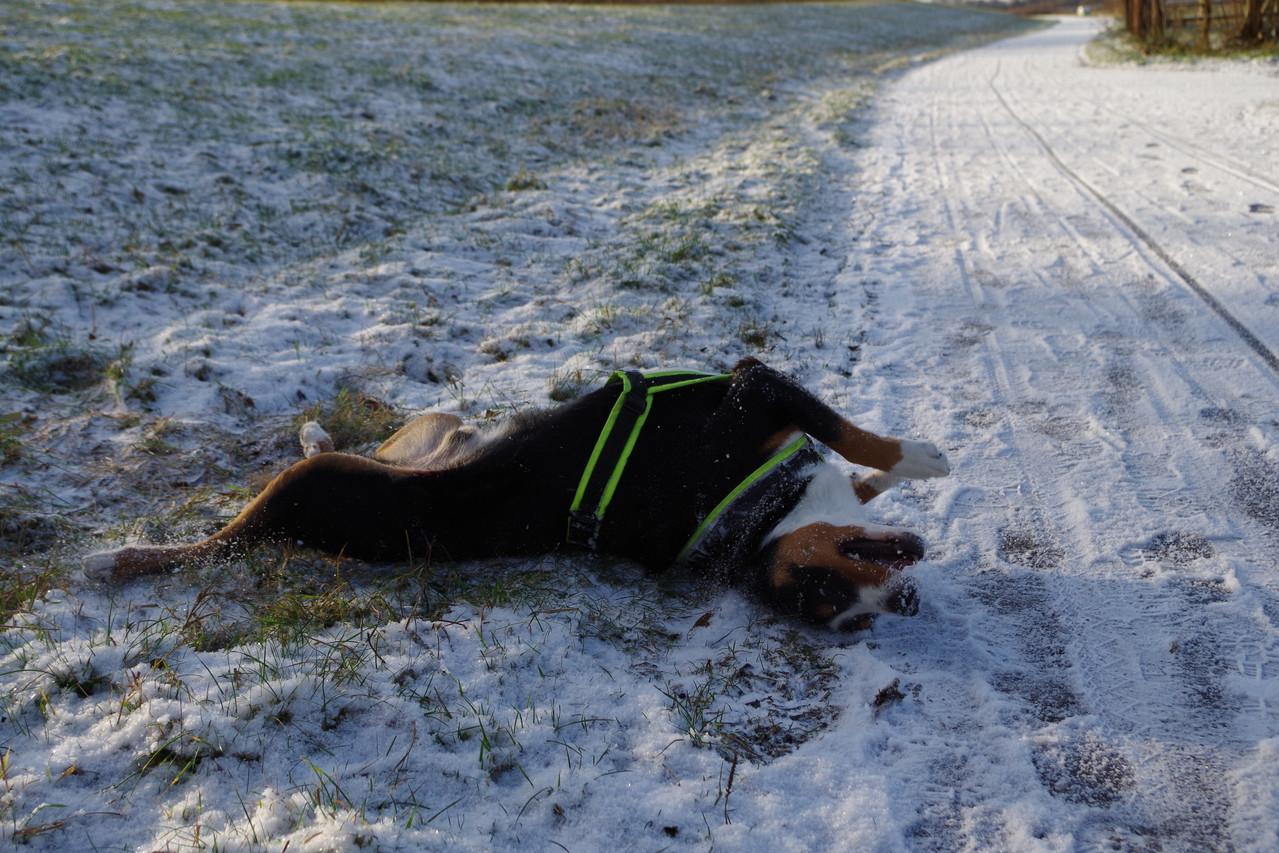 Fell pflege ist so toll im Schnee