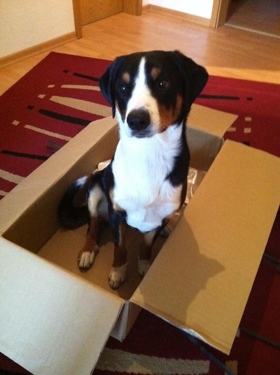 Dieses Paket war für mich...mein Futter!!!