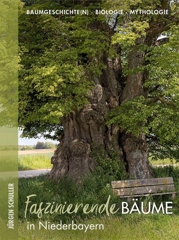 Faszinierende Bäume in der Oberpfalz