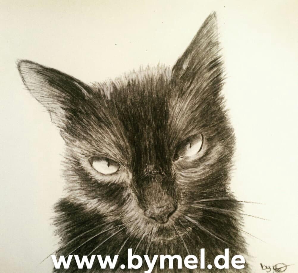 Kohleportrait einer Katze