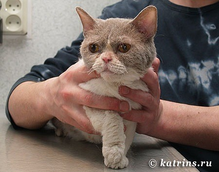 1. кошка перед операцией