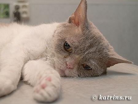 17. через 10 минут после окончания операции кошка начала просыпаться
