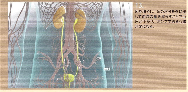 10.水分を体外に出すことで血圧が下がり、ポンプの心臓が楽になります。