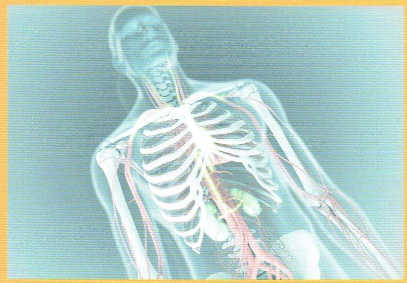 腎臓から放出されたEPOは血液の流れに乗る。