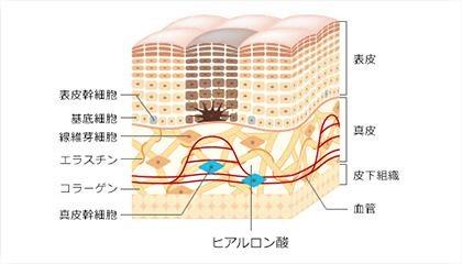 体内コラーゲンを探査