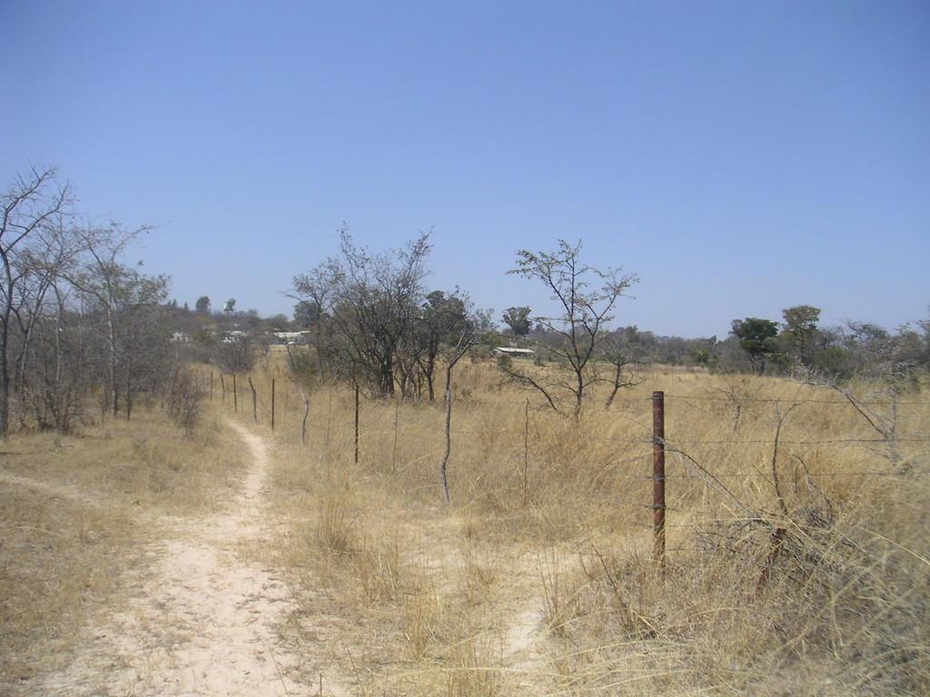 """La """"vegetazione"""" con la quale la gente ha a chefare quotidianamente - ZIMBABWE 2006"""