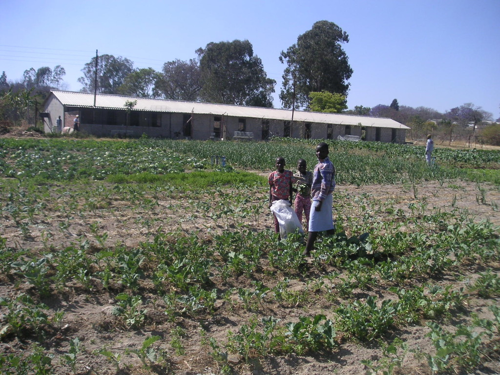 L'orto con il pollaio, sullo sfondo - ZIMBABWE 2006