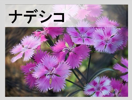 ナデシコ酵母の日本酒は種類が豊富