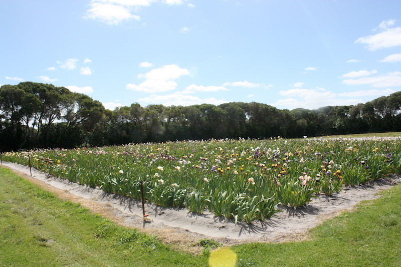 Les semis 2011