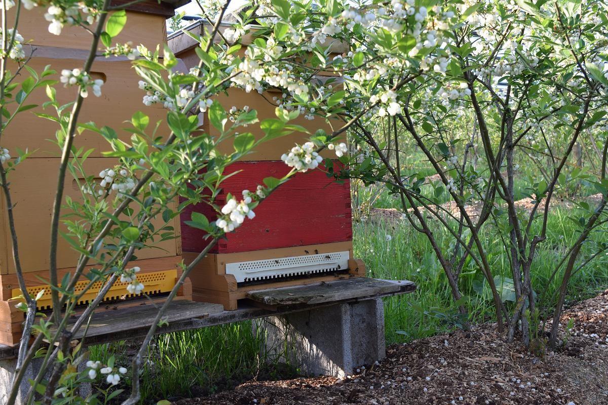 2 Bienenvölker in der Anlage
