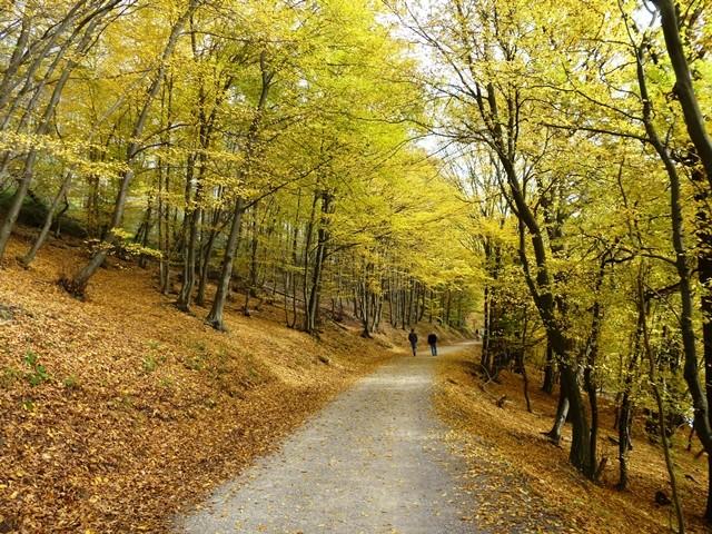 Bauernhof-Wald