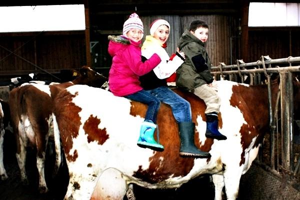 Kuhreiten Ferien auf dem Bauernhof Eifel
