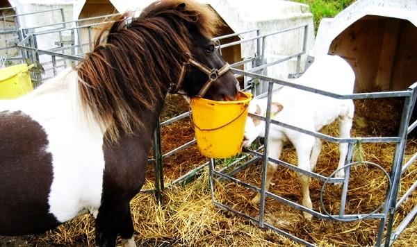 Pony Ferien auf dem Bauernhof Eifel