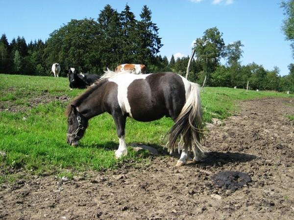 Pony Ferien Bauernhof Eifel