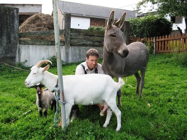 Tiere auf dem Bauernhof Eifel