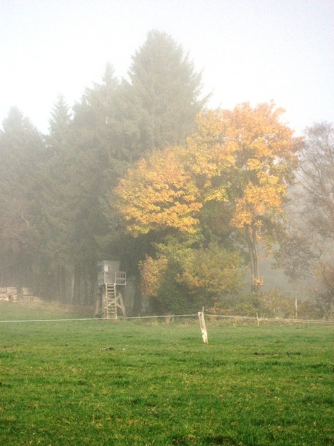 Bauernhof-Frühnebel