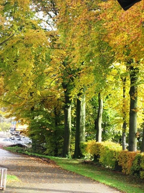 Bauernhof-bunte Bäume