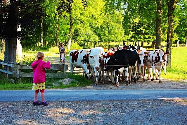 Eifel Ferienwohnung Bauernhof