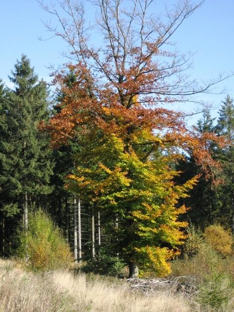 Bauernhof nrw-Herbstbäume