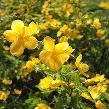 黄色い花 何