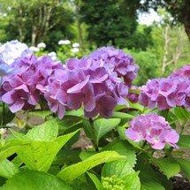 紫の花 何