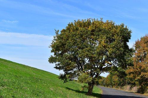 榎 樹木 画像