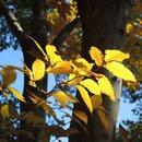 日本の樹木,植物