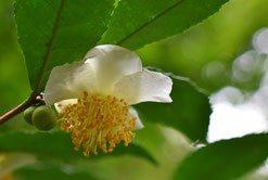 今咲いている花 木