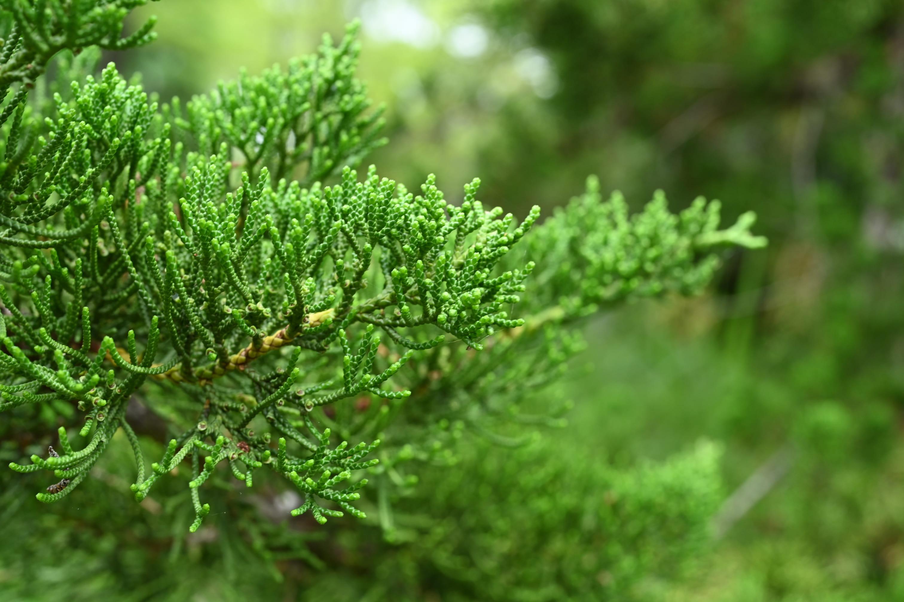 貝塚息吹 植木