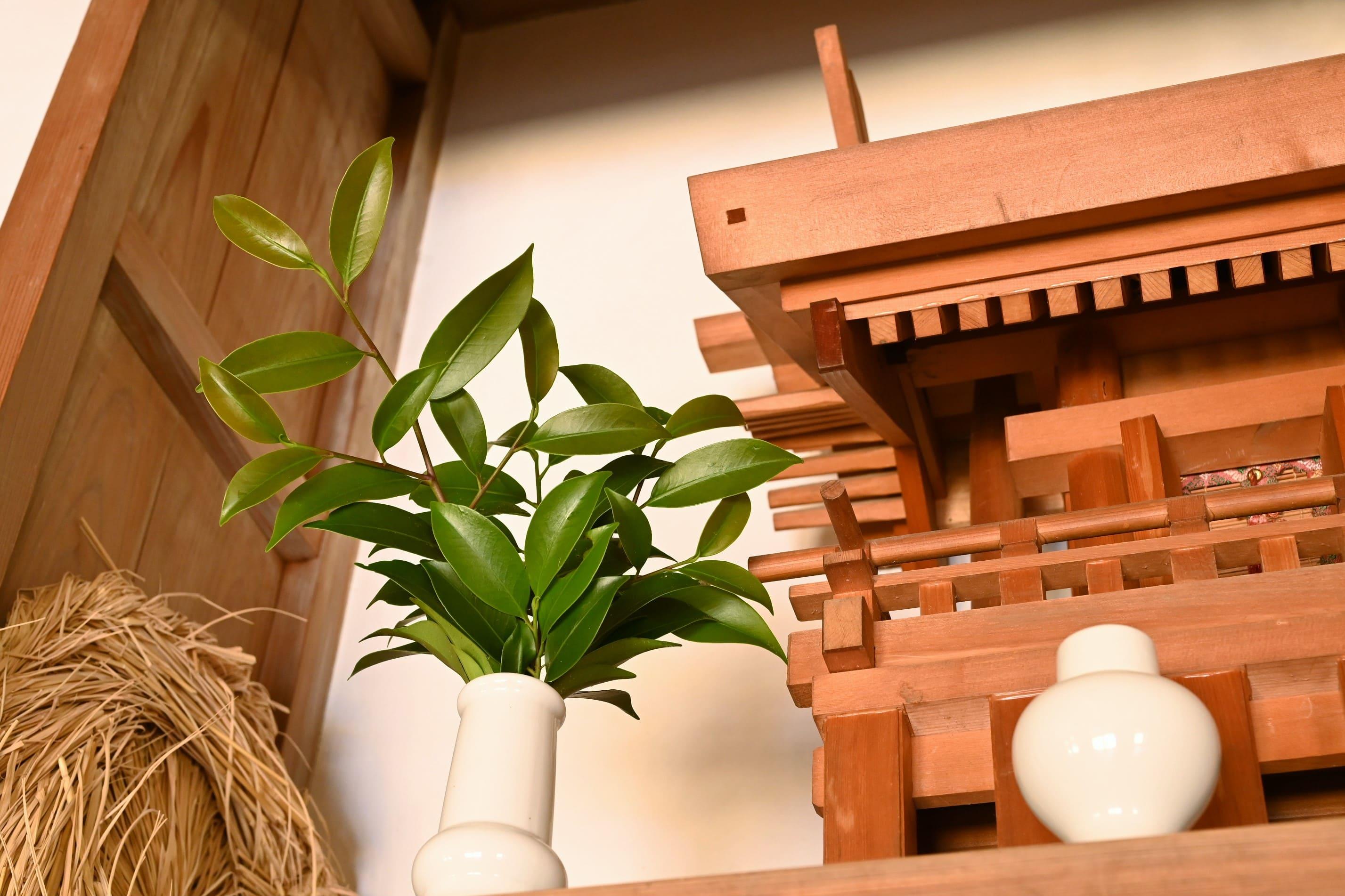 神棚に使う葉,さかき,木,種類
