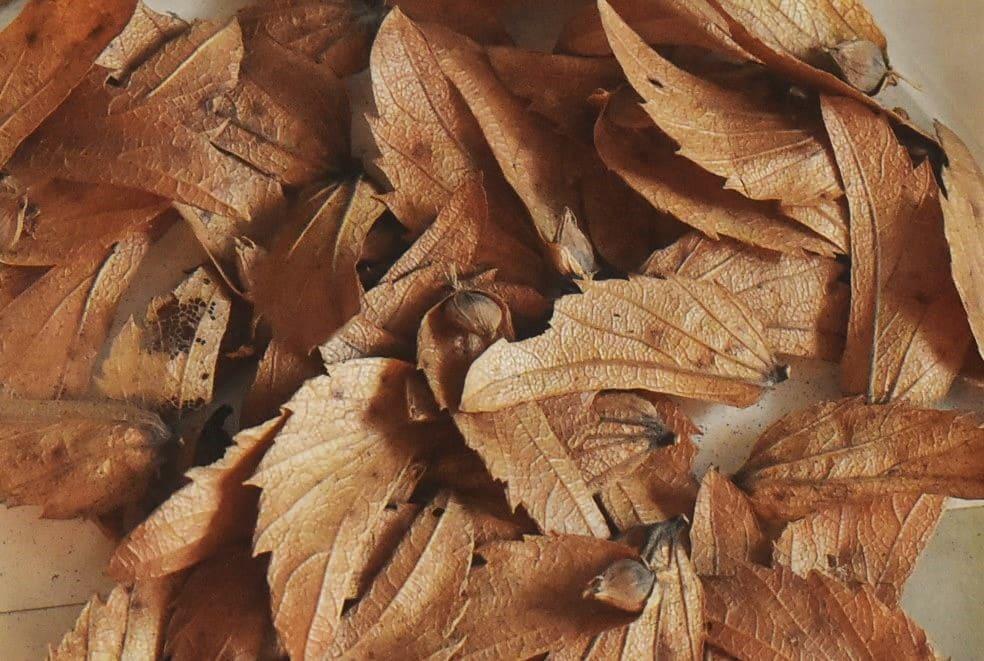 イヌシデの種 画像