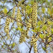 黄色 樹木 花 何